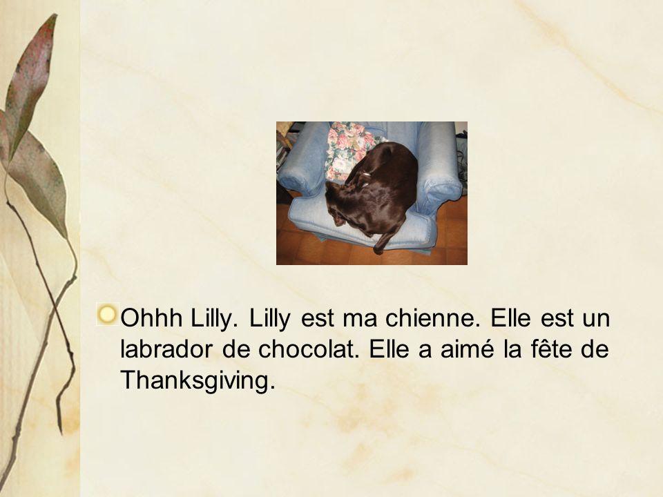 Ohhh Lilly. Lilly est ma chienne. Elle est un labrador de chocolat.
