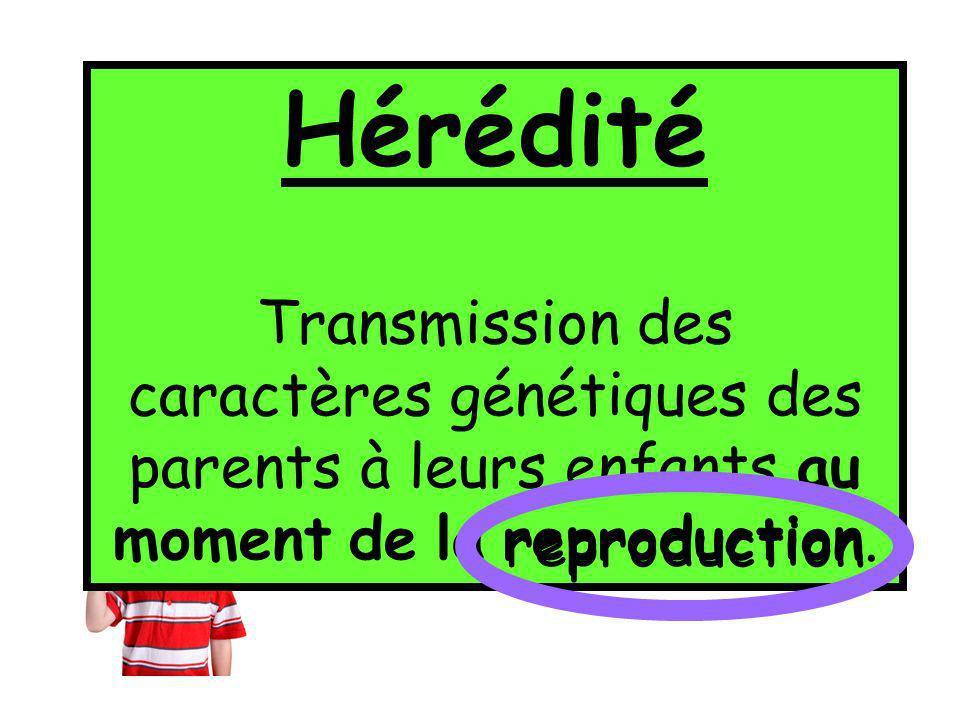Par un principe de transmission des caractères appelé: lHÉRÉDITÉ Hérédité Transmission des caractères génétiques des parents à leurs enfants au moment