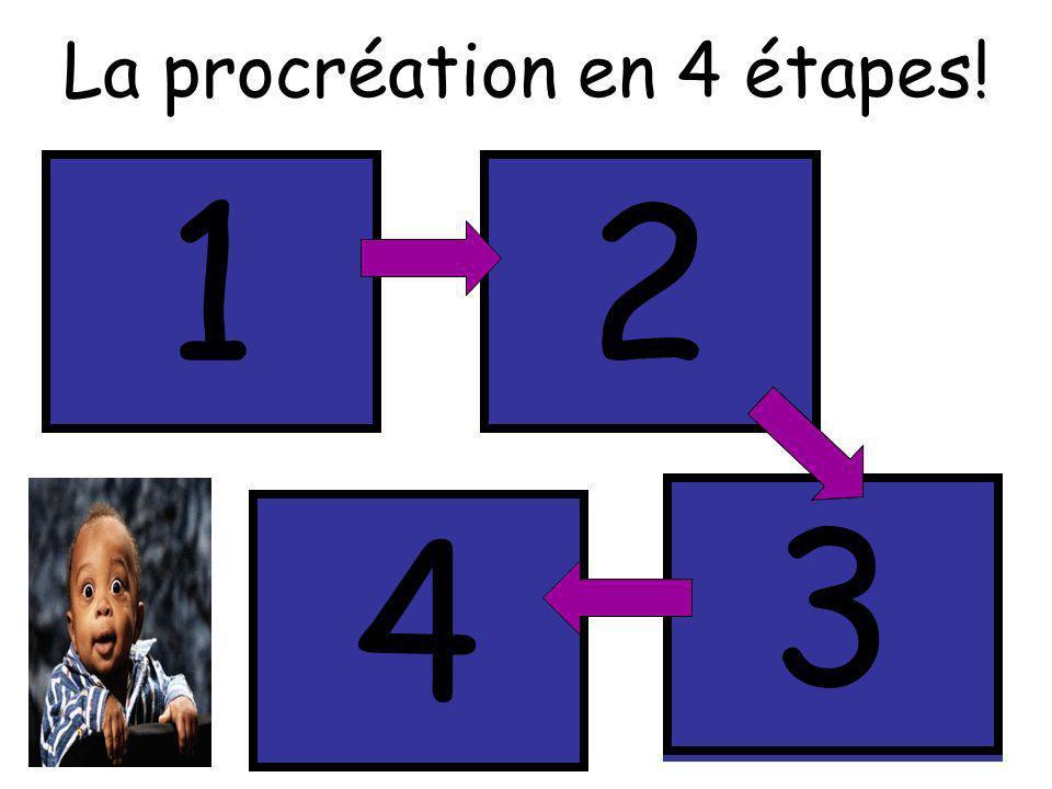 La procréation en 4 étapes! Méiose Formation des gamètes (cellule sexuelle) Fécondation Rencontre des gamètes (mâle+femelle) Échange Partage du bagage
