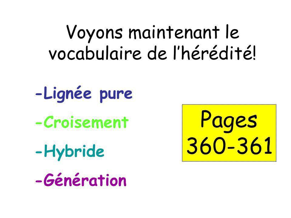 Voyons maintenant le vocabulaire de lhérédité! -Lignée pure -Croisement -Hybride -Génération Pages 360-361