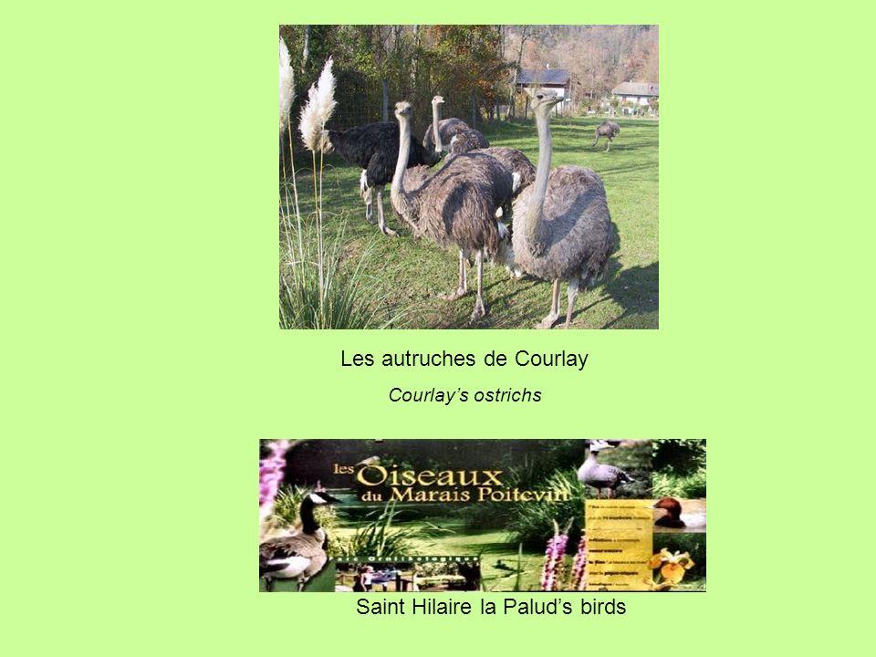 Saint Hilaire la Paluds birds Les autruches de Courlay Courlays ostrichs