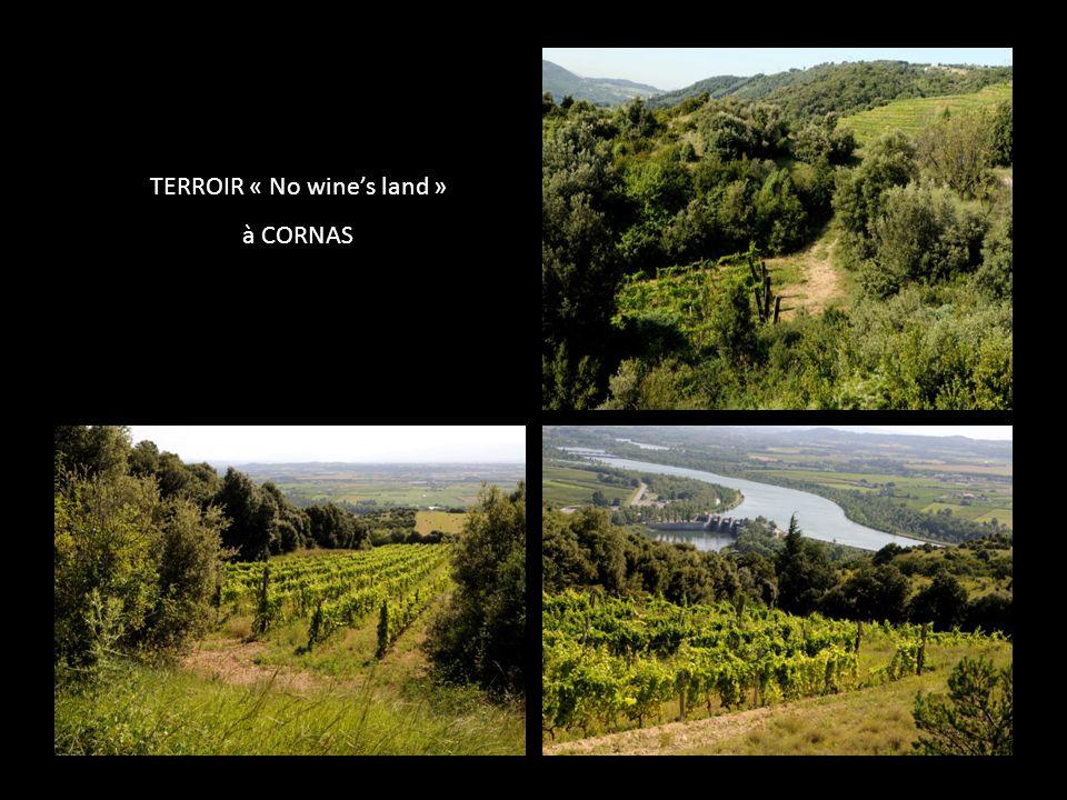 TERROIR « No wines land » à CORNAS