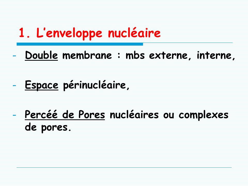 II. Constituants du noyau -Lenveloppe nucléaire, -Le nucléole, -Le nucléoplasme, -Les pores nucléaires, -La chromatine.