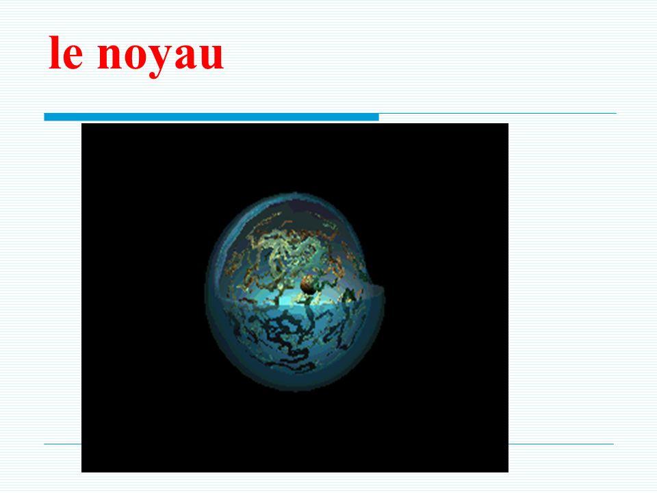 c.La lamina nucléaire (rôles) -Tapisse la face interne de la membrane interne nucléaire.