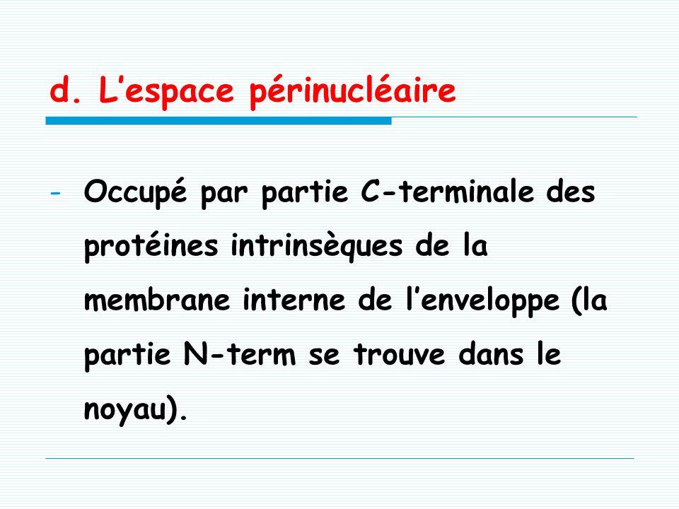 c. La lamina nucléaire (rôles) -Tapisse la face interne de la membrane interne nucléaire. -Stabilise -lenveloppe nucléaire -les pores nucléaires maint