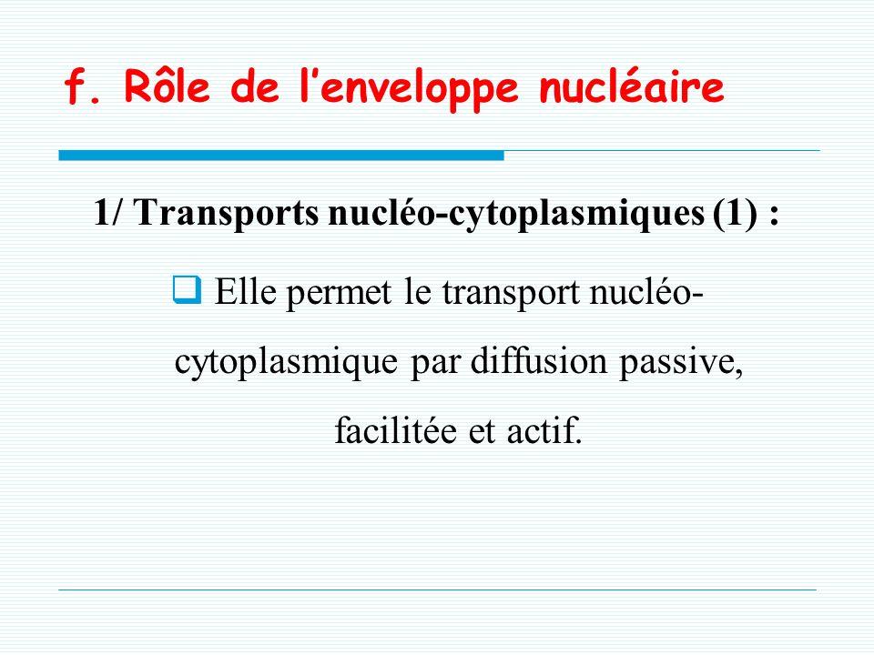 -Formé de 50 protéines: Nucléoporines -Constitué de 2 anneaux cytoplasmique et nucléaire, -Chacun est constitué de 8 sous-unités globulaires. e. Le co