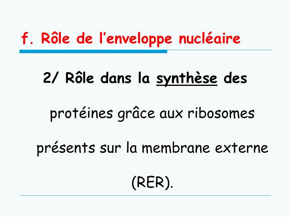 f. Rôle de lenveloppe nucléaire 1/ Transports nucléo-cytoplasmiques (1) : Elle permet le transport nucléo- cytoplasmique par diffusion passive, facili