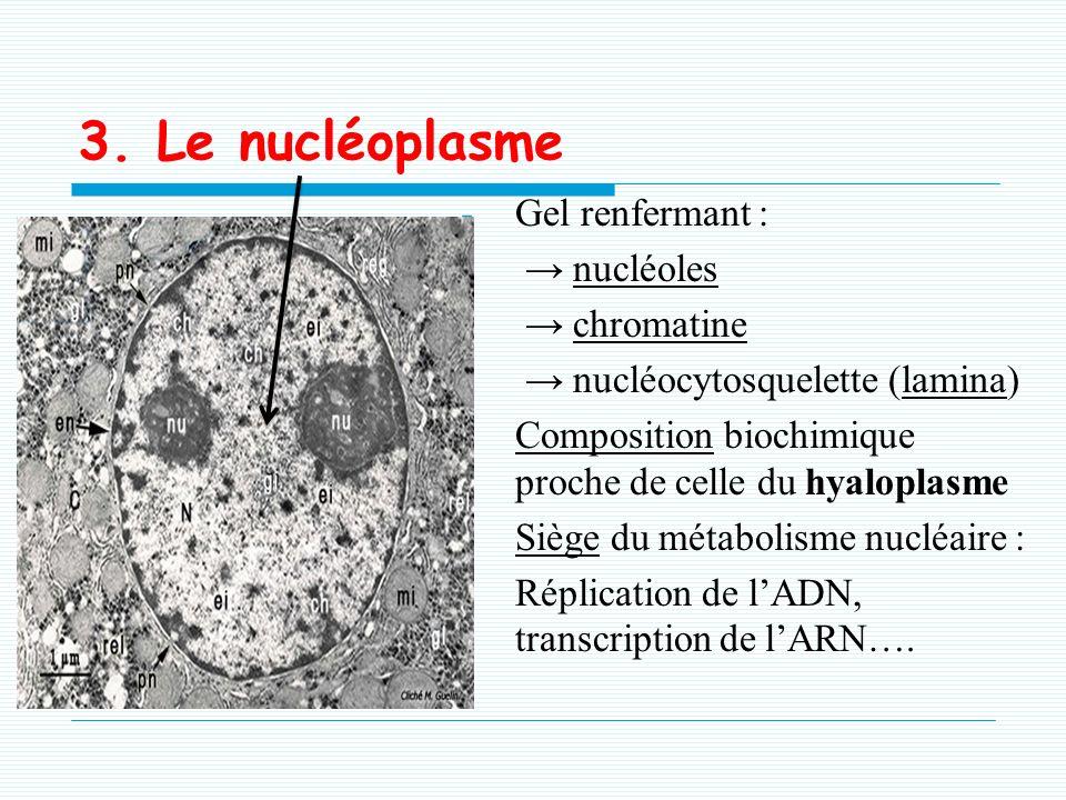 Siège de la production des ribosomes : Il est le siège de transcription des gènes ribosomiques et gènes de transcription des ARN. La taille des nucléo