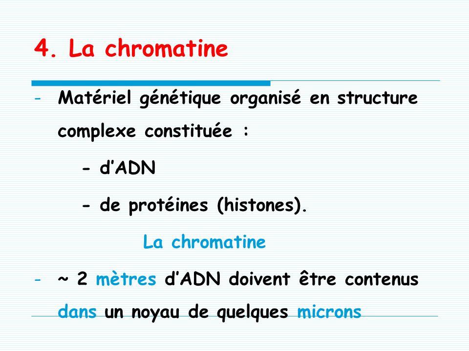 -Gel renfermant : nucléoles chromatine nucléocytosquelette (lamina) -Composition biochimique proche de celle du hyaloplasme -Siège du métabolisme nucl