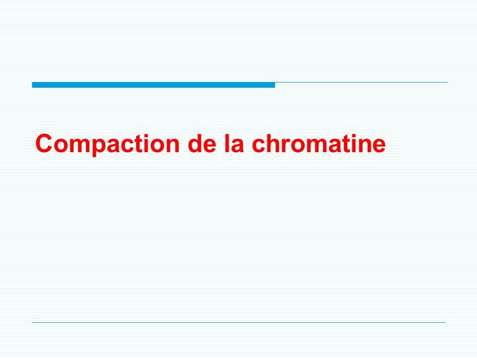 4. La chromatine -Matériel génétique organisé en structure complexe constituée : - dADN - de protéines (histones). La chromatine -~ 2 mètres dADN doiv