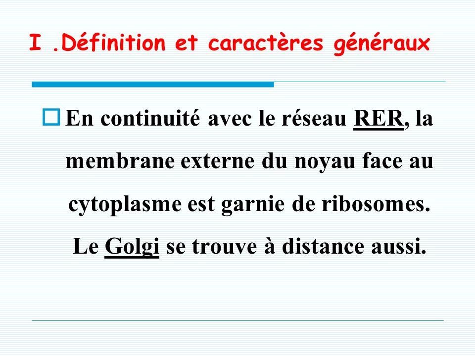 I.Définition et caractères généraux En continuité avec le réseau RER, la membrane externe du noyau face au cytoplasme est garnie de ribosomes.