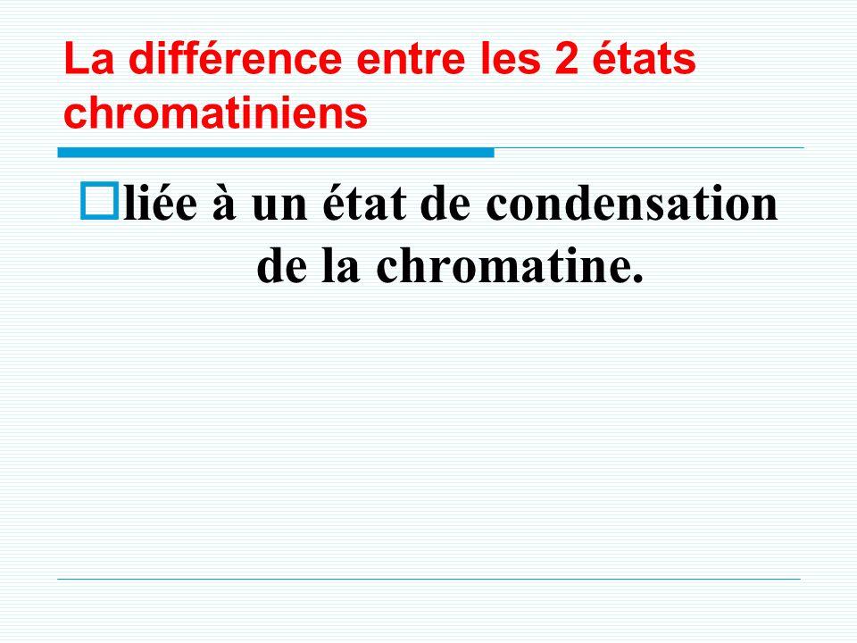 4.2. Lhétérochromatine c
