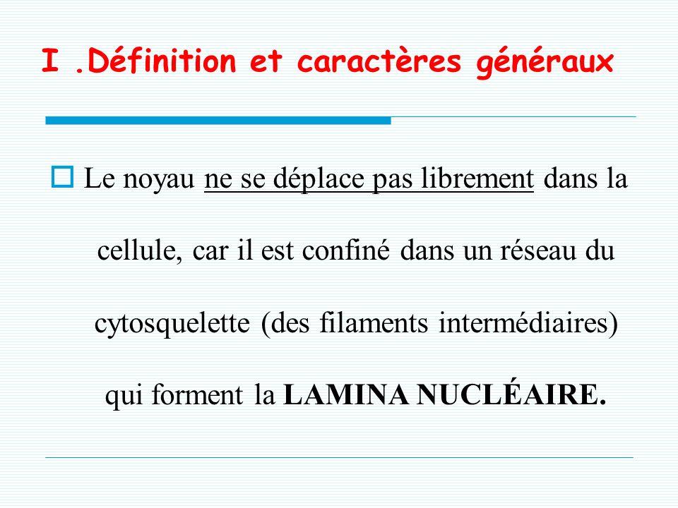 I.Définition et caractères généraux Le noyau ne se déplace pas librement dans la cellule, car il est confiné dans un réseau du cytosquelette (des filaments intermédiaires) qui forment la LAMINA NUCLÉAIRE.