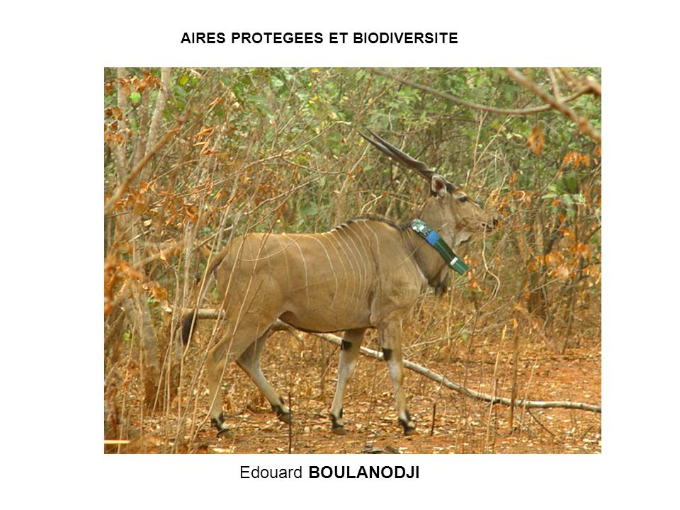 AIRES PROTEGEES ET BIODIVERSITE Edouard BOULANODJI