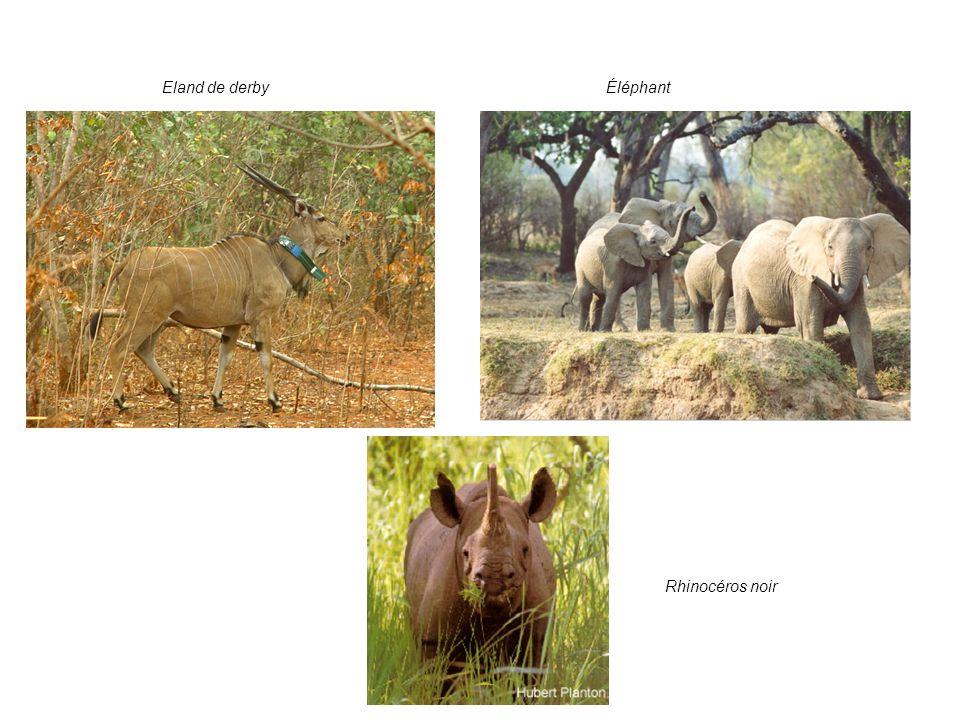 4. Les enjeux: valeur pour la conservation: suite ÉléphantEland de derby Rhinocéros noir
