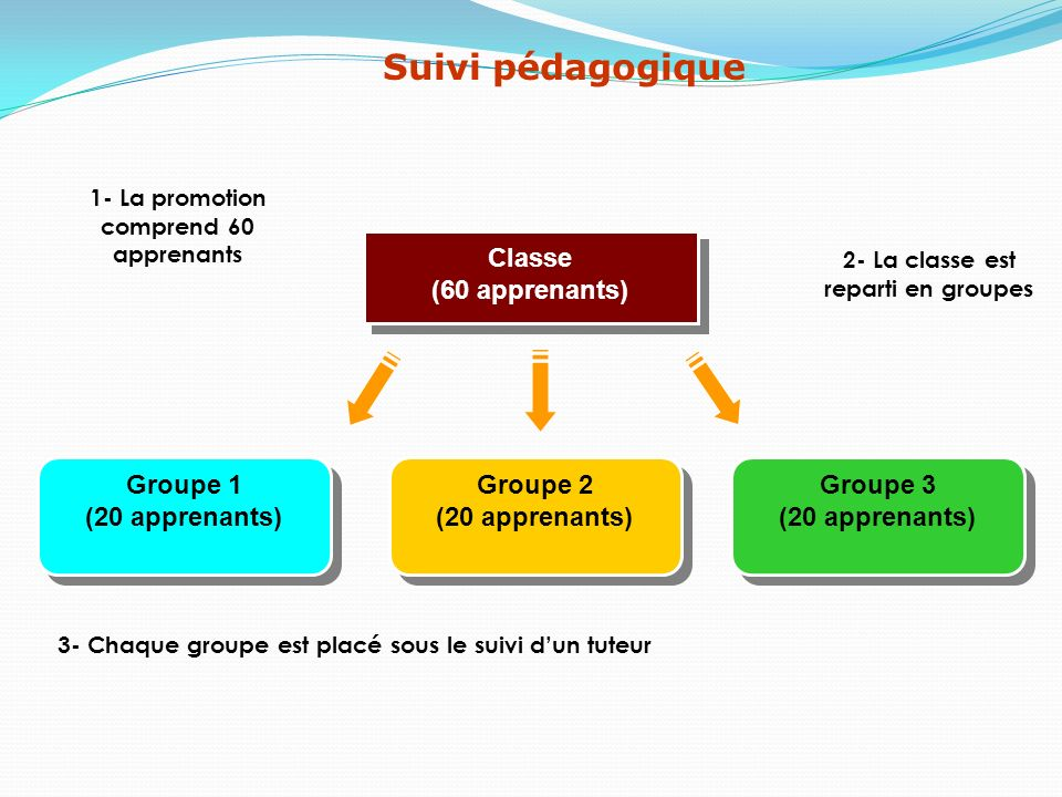 Groupe 1 (20 apprenants) Groupe 1 (20 apprenants) 1- La promotion comprend 60 apprenants 2- La classe est reparti en groupes Classe (60 apprenants) Cl
