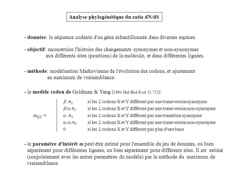 Analyse phylogénétique du ratio dN/dS - objectif: reconstruire l'histoire des changements synonymes et non-synonymes aux différents sites (positions)