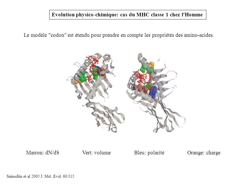 Evolution physico-chimique: cas du MHC classe 1 chez l'Homme Vert: volumeBleu: polaritéOrange: chargeMarron: dN/dS Sainudiin et al 2005 J. Mol. Evol.