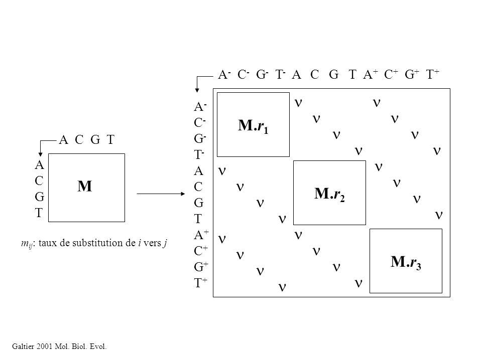 A C G T ACGTACGT M m ij : taux de substitution de i vers j A - C - G - T - A C G T A + C + G + T + M.r 1 M.r 2 M.r 3 A-C-G-T-ACGTA+C+G+T+A-C-G-T-ACGTA