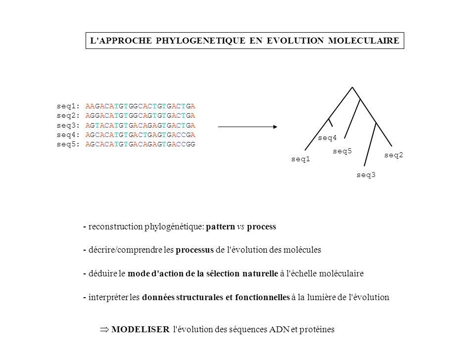 L'APPROCHE PHYLOGENETIQUE EN EVOLUTION MOLECULAIRE seq1: AAGACATGTGGCACTGTGACTGA seq2: AGGACATGTGGCAGTGTGACTGA seq3: AGTACATGTGACAGAGTGACTGA seq4: AGC