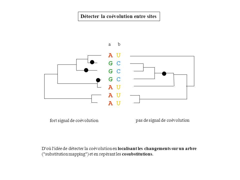 A U G C A U Détecter la coévolution entre sites a b fort signal de coévolution pas de signal de coévolution D'où l'idée de détecter la coévolution en