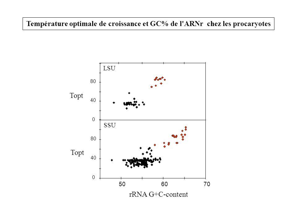 0 40 80 0 40 80 506070 SSU LSU Topt rRNA G+C-content Température optimale de croissance et GC% de l'ARNr chez les procaryotes