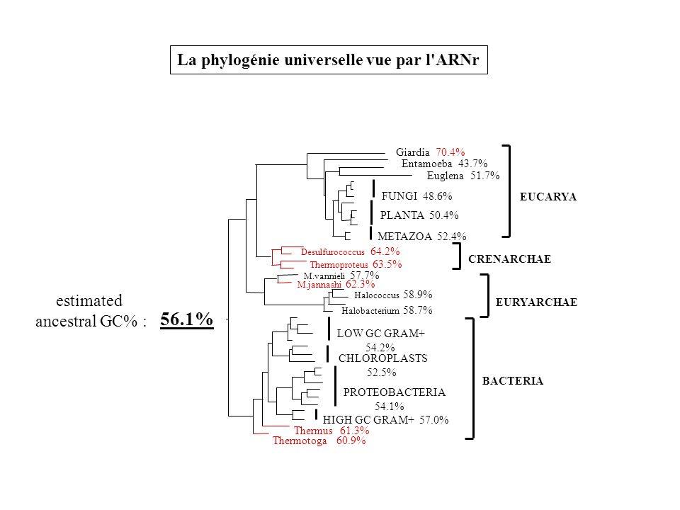 La phylogénie universelle vue par l'ARNr 56.1% estimated ancestral GC% :