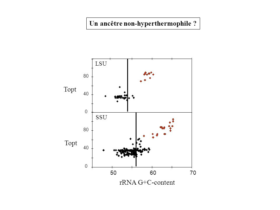 0 40 80 0 40 80 506070 SSU LSU Topt rRNA G+C-content Un ancêtre non-hyperthermophile ?