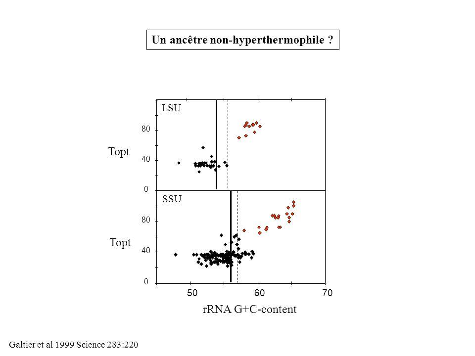 0 40 80 0 40 80 506070 SSU LSU Topt rRNA G+C-content Un ancêtre non-hyperthermophile ? Galtier et al 1999 Science 283:220