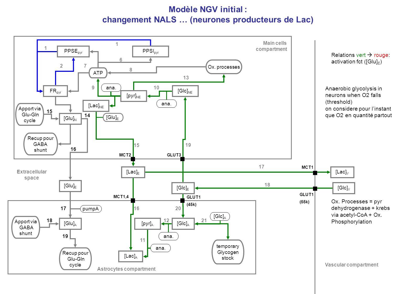 Extracellular space Main cells compartment Astrocytes compartment Vascular compartment Modèle NGV initial : changement NALS … (neurones producteurs de