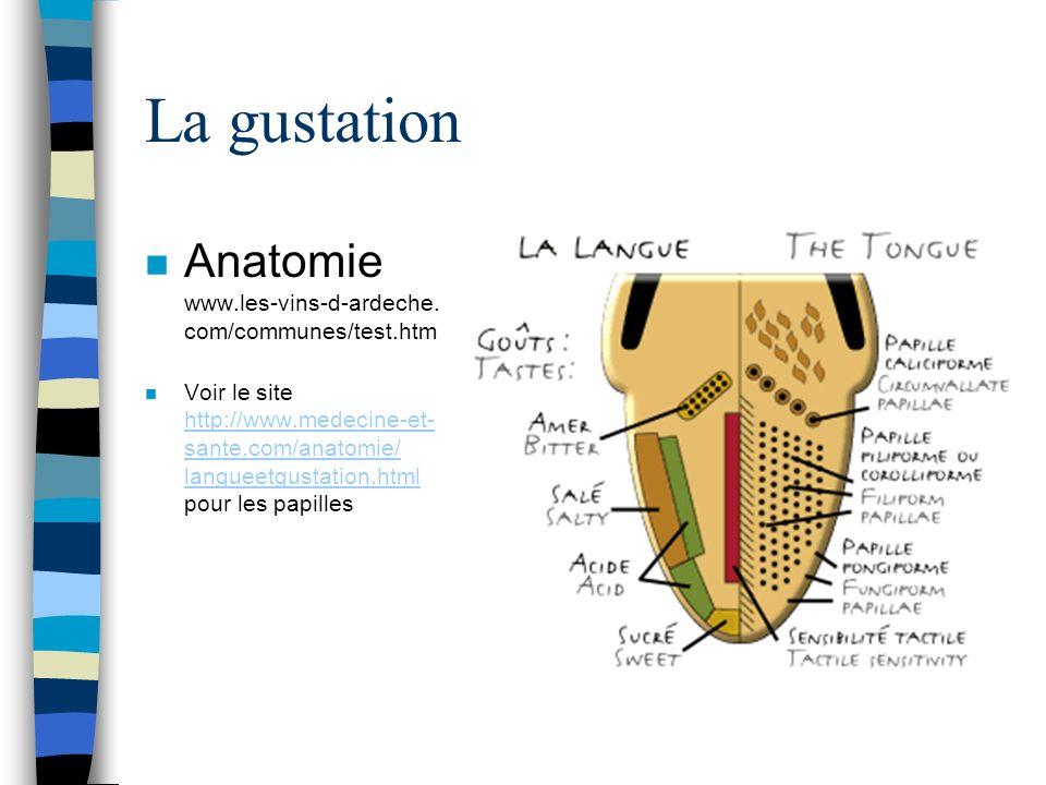 La gustation n Anatomie www.les-vins-d-ardeche. com/communes/test.htm n Voir le site http://www.medecine-et- sante.com/anatomie/ langueetgustation.htm