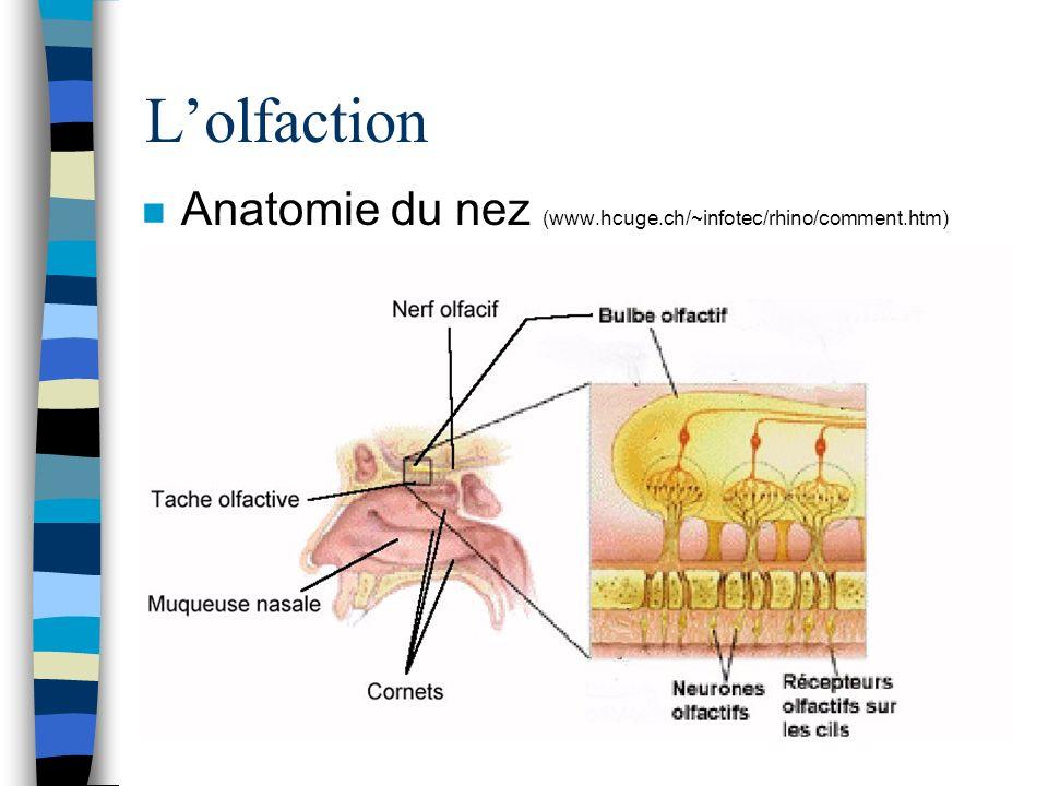 Lolfaction n Anatomie du nez (www.hcuge.ch/~infotec/rhino/comment.htm)