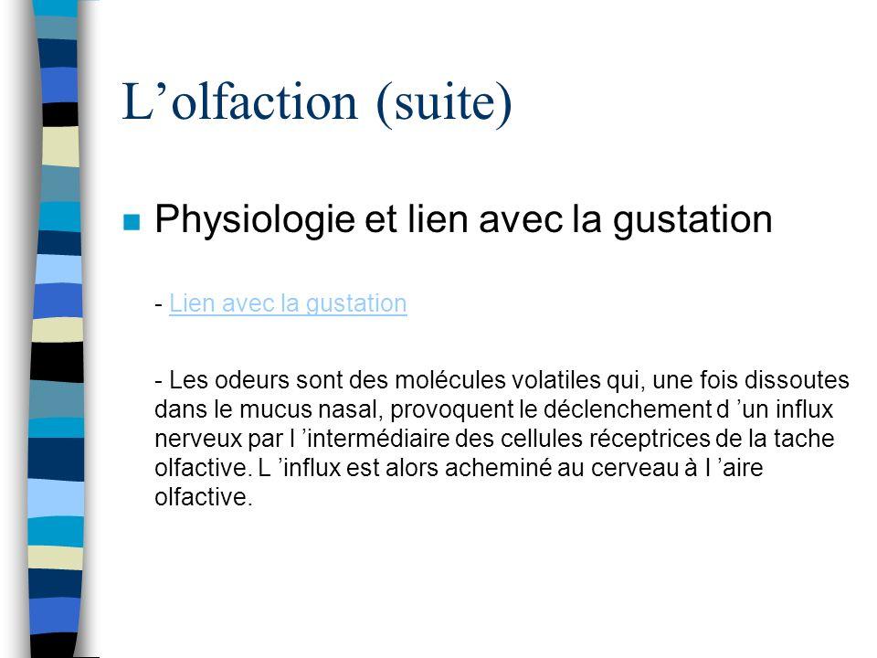 Lolfaction (suite) n Physiologie et lien avec la gustation - Lien avec la gustation - Les odeurs sont des molécules volatiles qui, une fois dissoutes