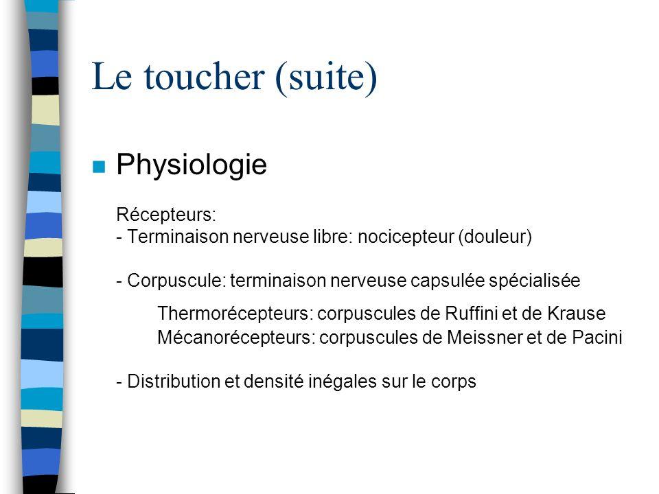 Le toucher (suite) n Physiologie Récepteurs: - Terminaison nerveuse libre: nocicepteur (douleur) - Corpuscule: terminaison nerveuse capsulée spécialis
