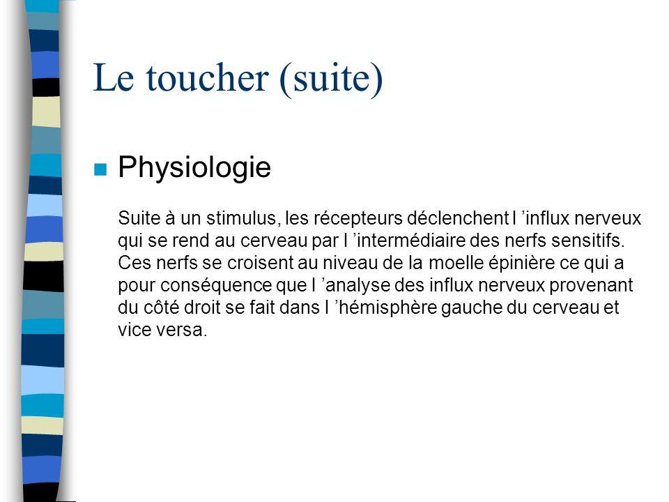 Le toucher (suite) n Physiologie Suite à un stimulus, les récepteurs déclenchent l influx nerveux qui se rend au cerveau par l intermédiaire des nerfs