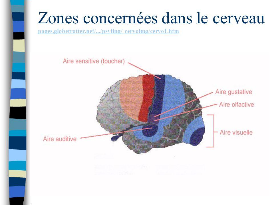 Zones concernées dans le cerveau pages.globetrotter.net/.../psyling/ cervoimg/cervo1.htm pages.globetrotter.net/.../psyling/ cervoimg/cervo1.htm
