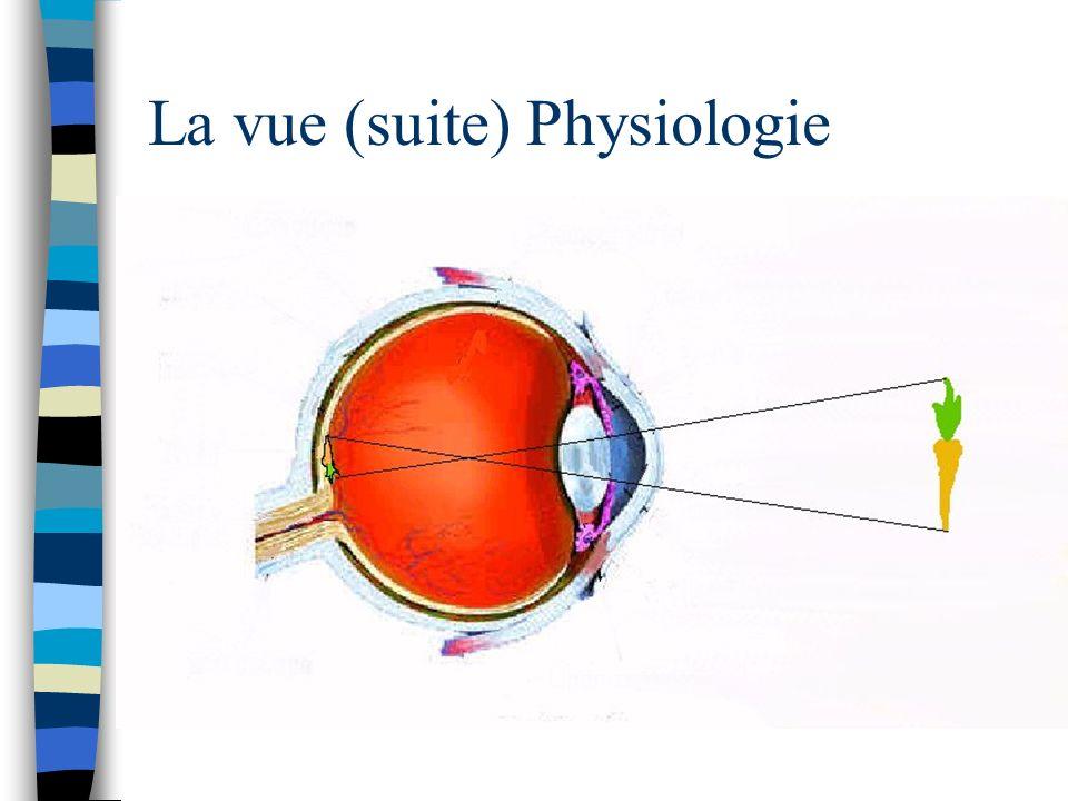 La vue (suite) n Physiologie La lumière pénètre dans l œil… - traverse, dans l ordre: - la conjonctive (membrane protectrice de l œil) - la cornée (prolongement de la sclérotique, milieu transparent, fait converger la lumière vers la rétine) - l humeur aqueuse (milieu transparent, apparence d eau, convergence de la lumière = vrai mais moins important VS cornée et cristallin) - la pupille, définie par l iris (l iris, prolongement de la choroïde, détermine la quantité de lumière qui pénètre dans l œil en se contractant ou se dilatant réduisant ou augmentant ainsi la taille de la pupille) - le cristallin (milieu transparent, principal outil de convergence de la lumière, sa forme est déterminée par la contraction ou le relâchement des ligaments suspenseurs)