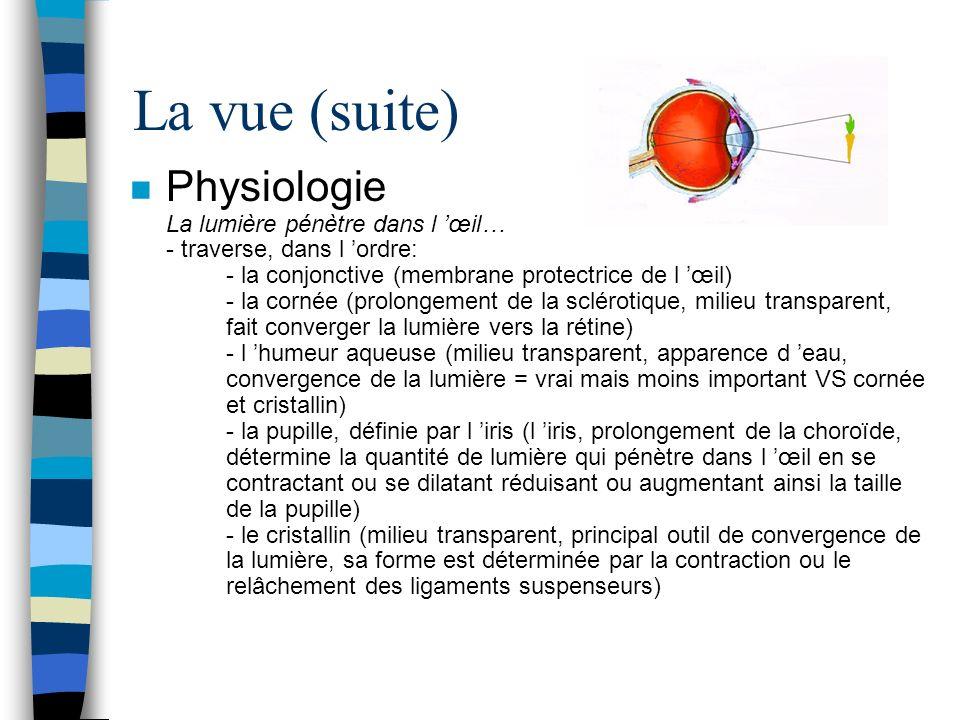 La vue (suite) n Physiologie La lumière pénètre dans l œil… - traverse, dans l ordre: - la conjonctive (membrane protectrice de l œil) - la cornée (pr