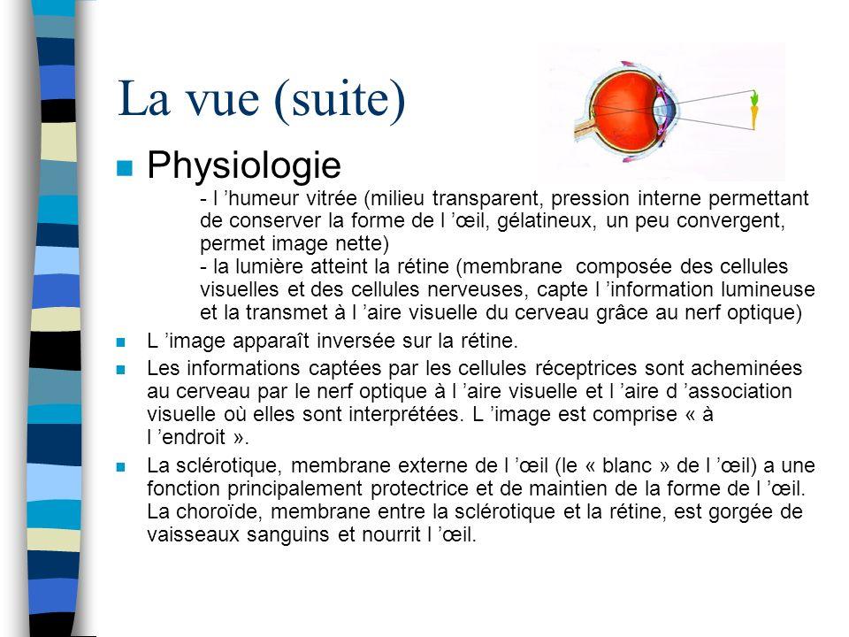 La vue (suite) n Physiologie - l humeur vitrée (milieu transparent, pression interne permettant de conserver la forme de l œil, gélatineux, un peu con