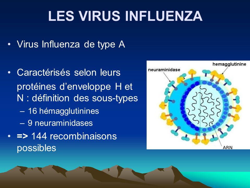 LES VIRUS INFLUENZA Virus Influenza de type A Caractérisés selon leurs protéines denveloppe H et N : définition des sous-types –16 hémagglutinines –9