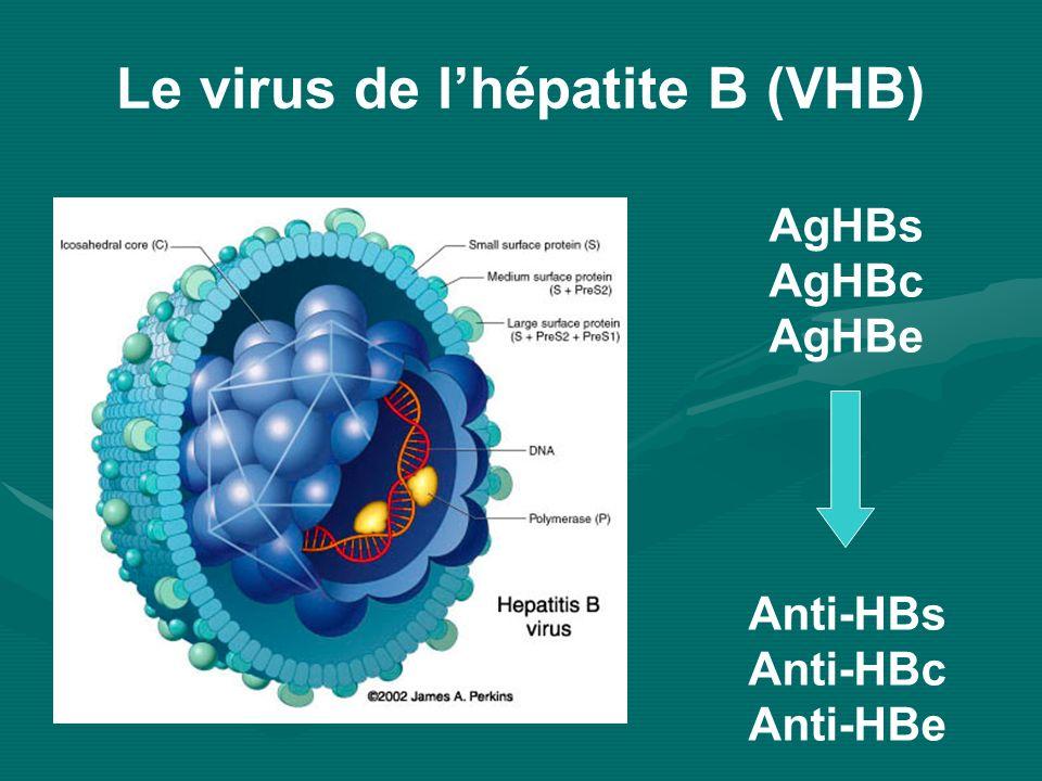 AgHBs AgHBc AgHBe Anti-HBs Anti-HBc Anti-HBe Le virus de lhépatite B (VHB)