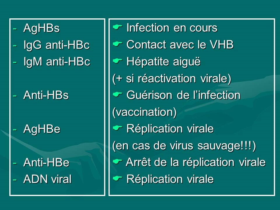 -AgHBs -IgG anti-HBc -IgM anti-HBc -Anti-HBs -AgHBe -Anti-HBe -ADN viral Infection en cours Infection en cours Contact avec le VHB Contact avec le VHB