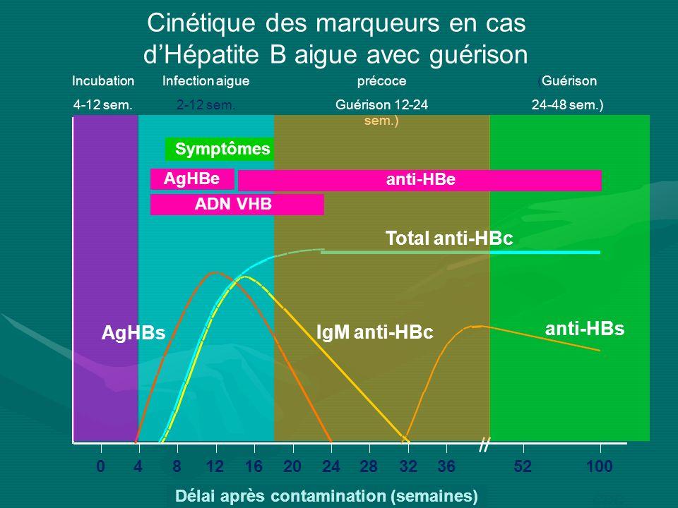 Cinétique des marqueurs en cas dHépatite B aigue avec guérison