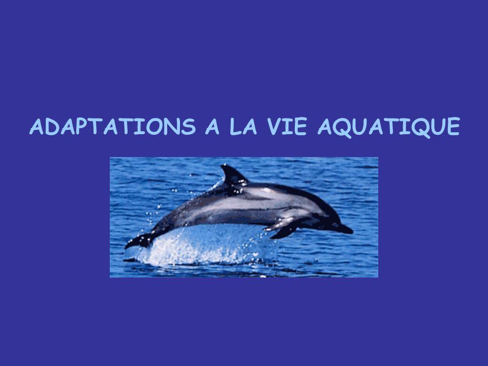 Les cétacés ont un ancêtre terrien puis sont secondairement retournés à la vie aquatique et ont colonisé tous les types deaux (douces/salées) Profondes modifications – anatomiques - physiologiques Pour que lespèce survive dans ce milieu particulier