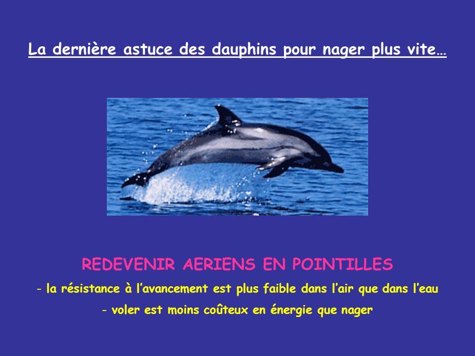 La dernière astuce des dauphins pour nager plus vite… REDEVENIR AERIENS EN POINTILLES - la résistance à lavancement est plus faible dans lair que dans leau - voler est moins coûteux en énergie que nager