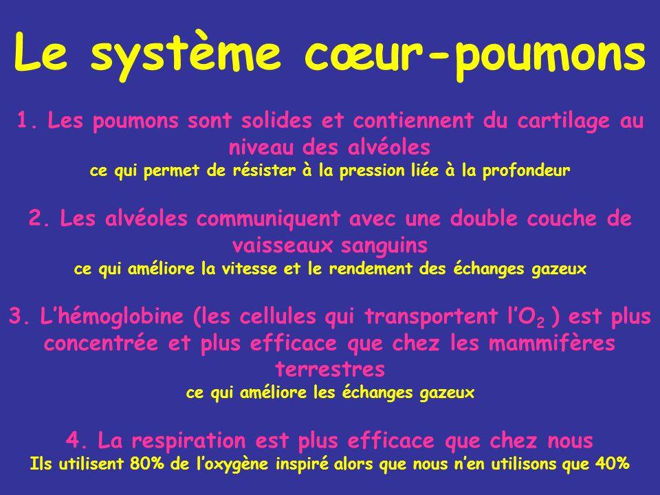 Le système cœur-poumons 1.