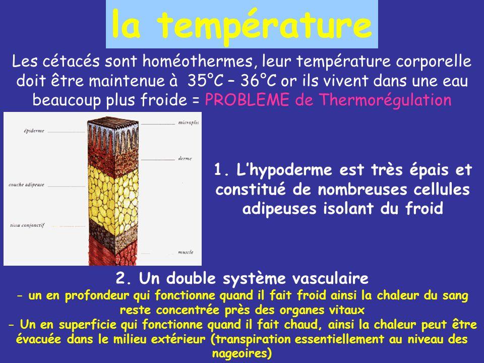 la température Les cétacés sont homéothermes, leur température corporelle doit être maintenue à 35°C – 36°C or ils vivent dans une eau beaucoup plus froide = PROBLEME de Thermorégulation 1.
