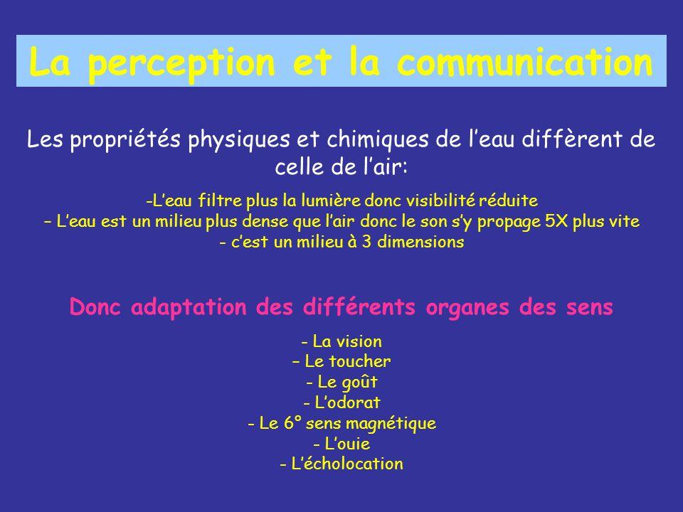 La perception et la communication Les propriétés physiques et chimiques de leau diffèrent de celle de lair: -Leau filtre plus la lumière donc visibilité réduite – Leau est un milieu plus dense que lair donc le son sy propage 5X plus vite - cest un milieu à 3 dimensions Donc adaptation des différents organes des sens - La vision – Le toucher - Le goût - Lodorat - Le 6° sens magnétique - Louie - Lécholocation