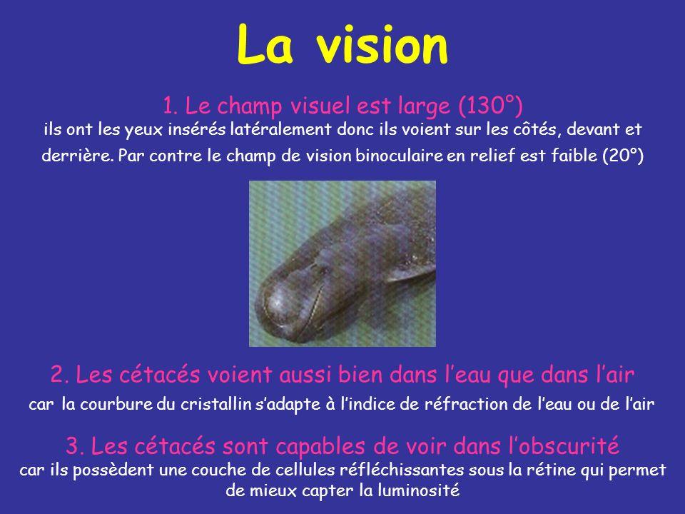 La vision 1.