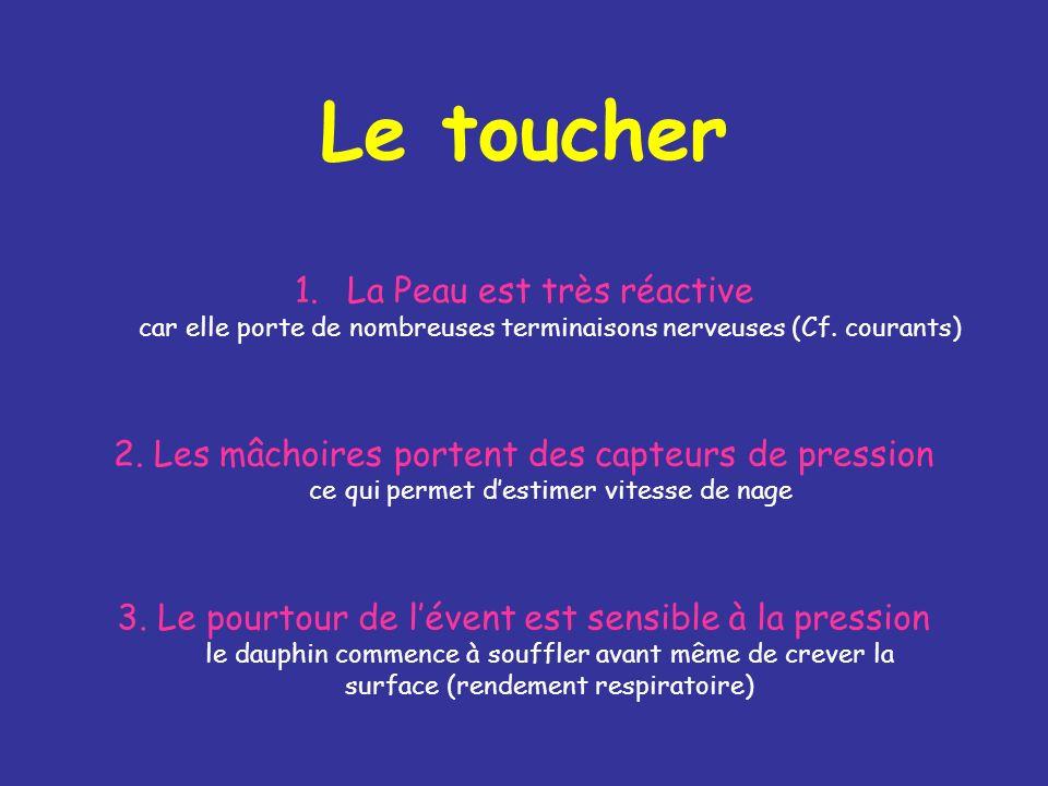 Le toucher 1.La Peau est très réactive car elle porte de nombreuses terminaisons nerveuses (Cf.